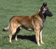 Mateo - dog